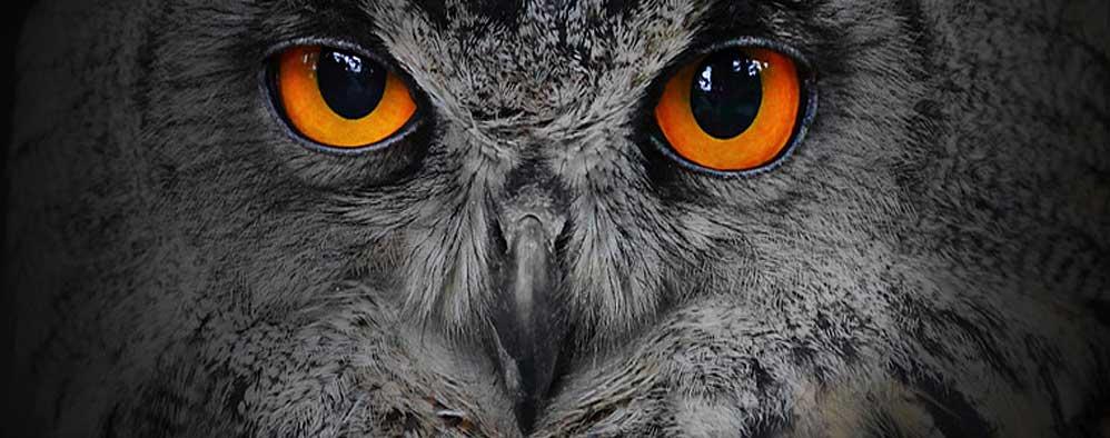 Schmuck Adler Eulen Löwen Fledermäuse Katze Anhänger und Amulette